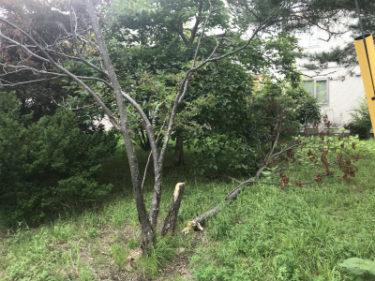 函館市鍛冶町の樹木伐採