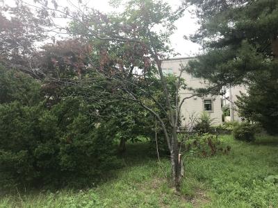 台風で折れた木