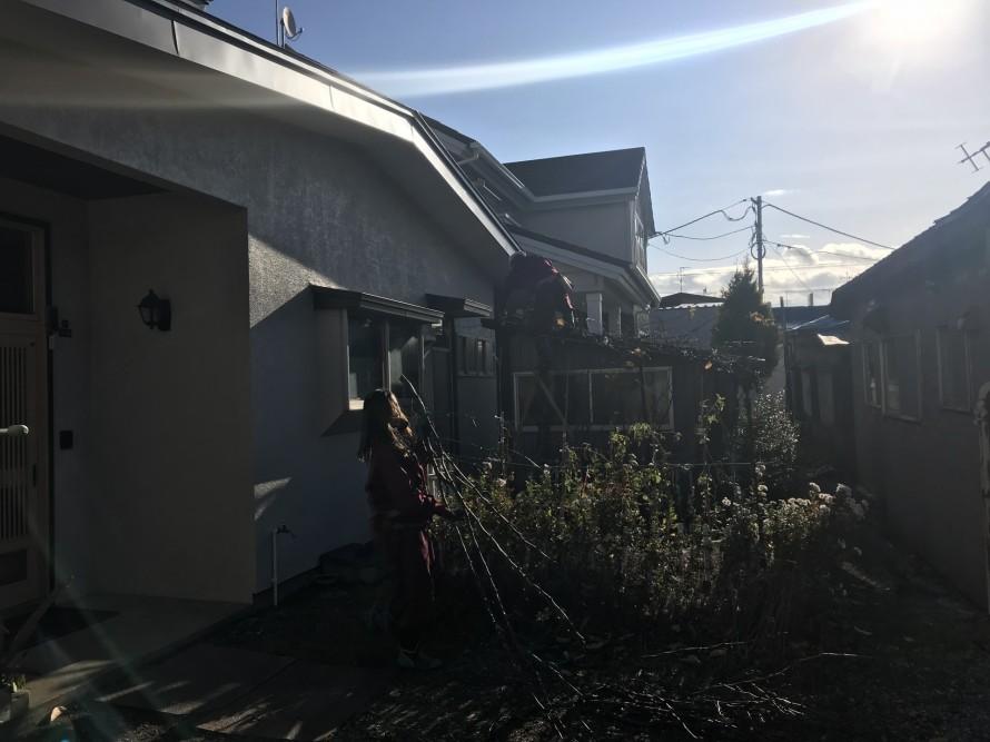 もみの木を切り落とす様子